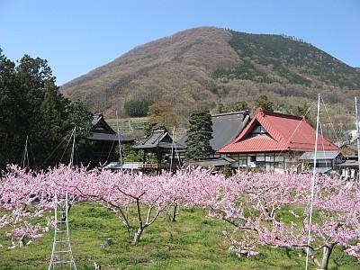 兜山と保雲寺と桃の木