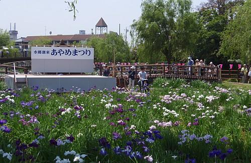 前川あやめ園
