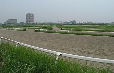川崎競馬小向練習馬場
