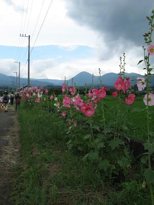 ハナアオイ農道