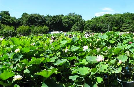 東京大学農学生命科学研究科付属緑地植物実験所