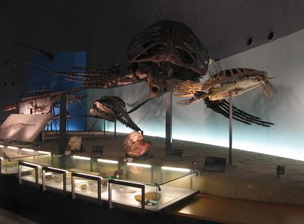 県立恐竜博物館 「生命の歴史」ゾーン