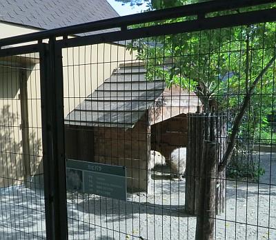 カピバラ小屋